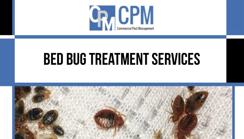 bed bug treatment services