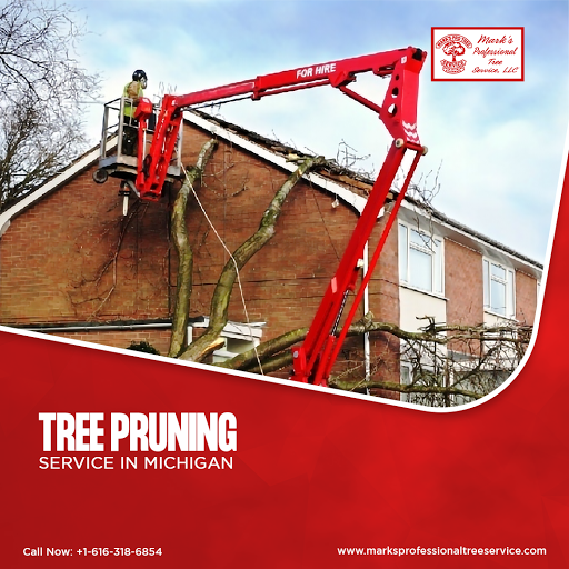 Tree Pruning Service in Michigan